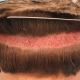 گرافت مو